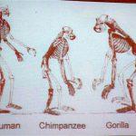 類人猿から見たヒトの衣食住by岩田有史さん @概論 1月24日