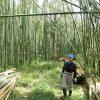 学園祭のお茶室を建てる−1 竹を伐りにいく 10/6