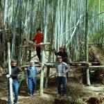 新入生と竹林の片付け作業 4月13日