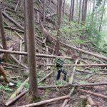 風倒木を削って小屋梁に  9月19日